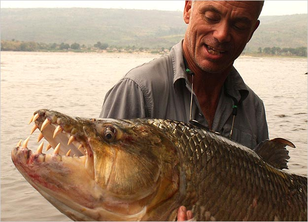 goliath_tigerfish_photo_03.jpg